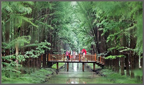 泰州:在沪投放1000万元旅游消费券 加速一体化