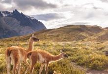 智利:11月23日起有條件開放邊境
