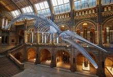 飞猪:大咖驾到 英国自然历史博物馆全球首播